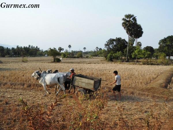 Kamboçya köyleri kampot