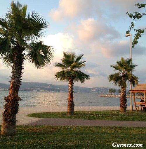 Kocaeli gezilecek yerler,Gölcük kavaklı sahili