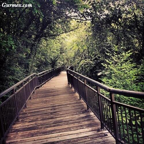 kent-reed-park-nerede-nasil-gidilir-gezilecek-yerler-singapur