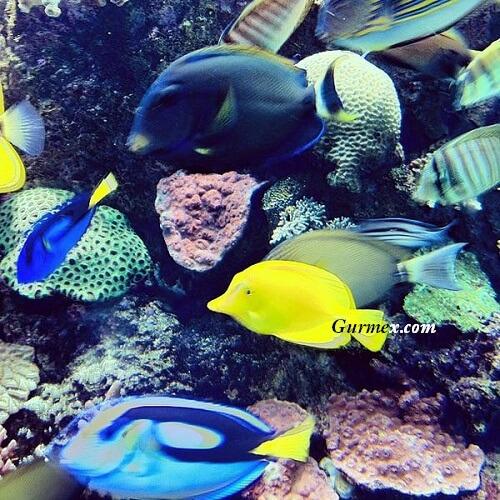 marine-life-park-ziyaret-saatleri-giris-ucretleri