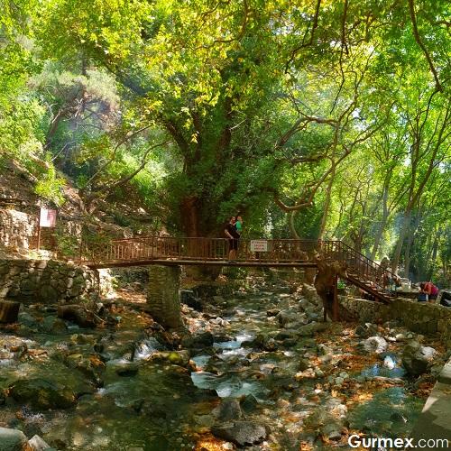 Güre Pınarbaşı Kaz Dağları mesire alanı